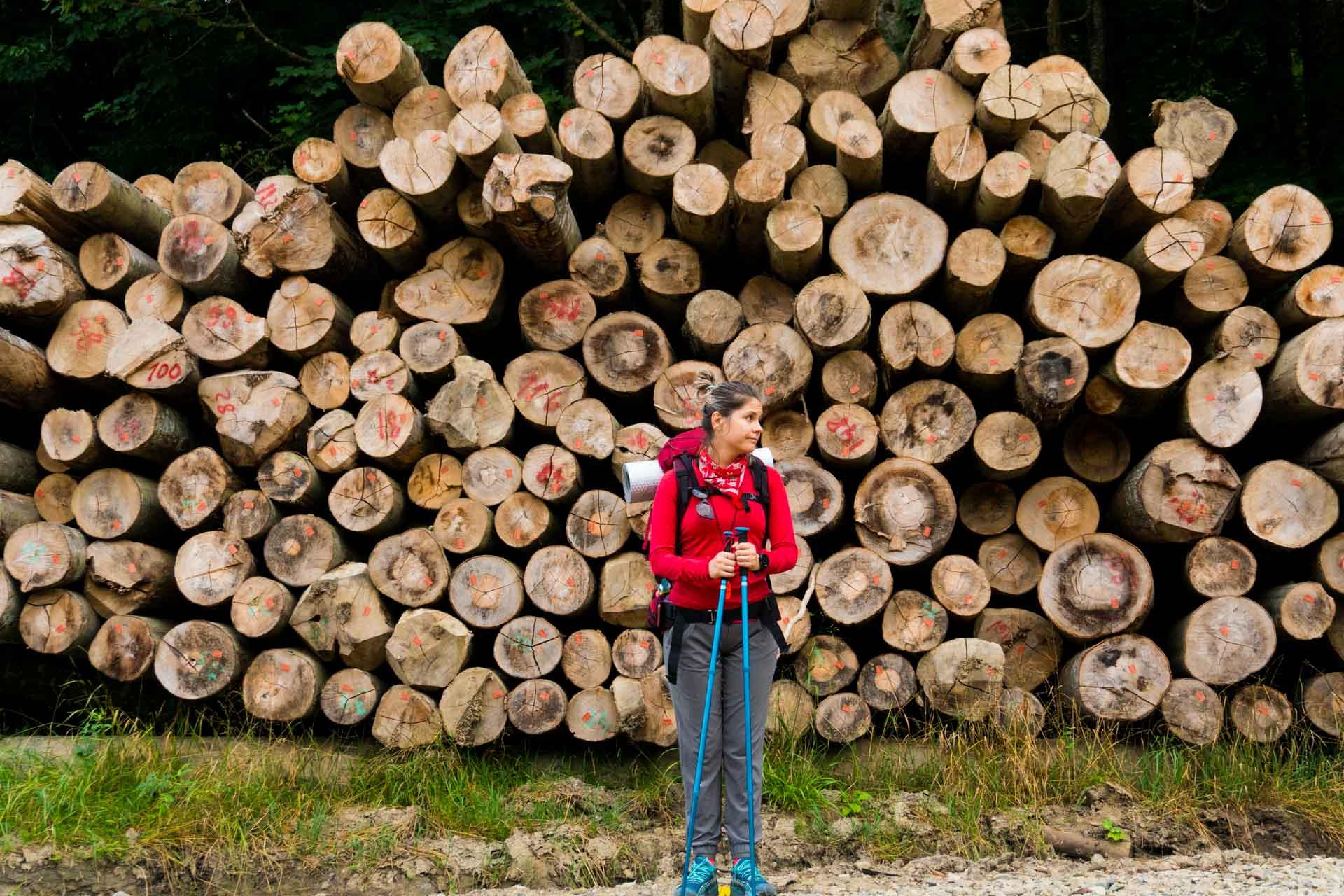 Mica being mică în fața unei recolte de lemne